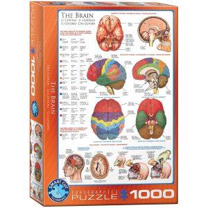 Puzzle Eurographics El cerebro humano de 1000 piezas