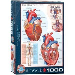 Puzzle Eurographics partes del corazón 1000 piezas
